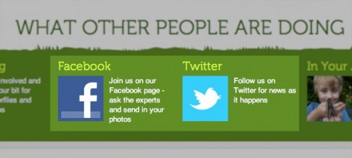 Butterfly conservation shows you how to get more followers